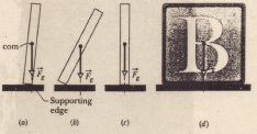 (0) A domino balanced on one edge. with its center of mass vertically above that edge. The gravitational force F; on the domino is directed through the supporting edge. (b) If the domino is rotated even slightly from the balanced orientation. then F; causes a torque that increases the rotation. (c) A domino upright on a narrow side is somewhat more stable than the domino in (0). (d) A square block is even more stable