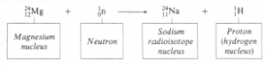 Irradiation of magnesium by neutrons