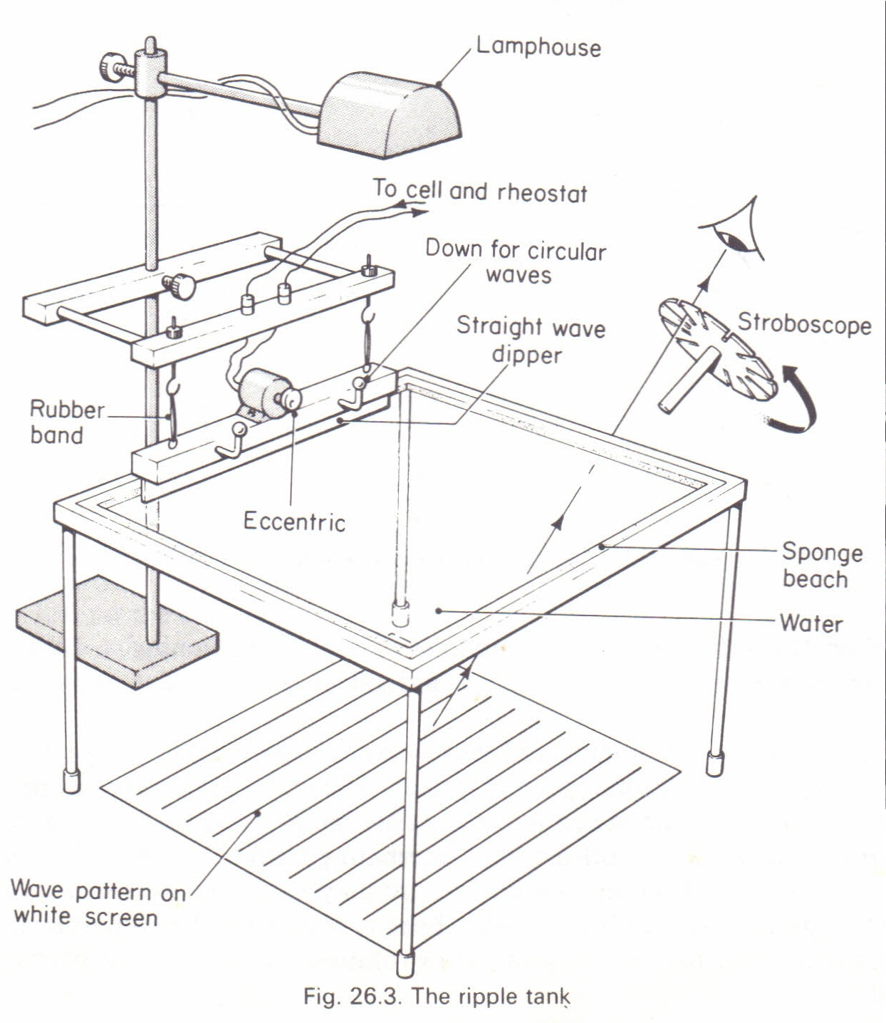 to study water waves a ripple tank physics homework help to study water waves a ripple tank
