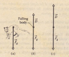 The forces that act on a body falling through air: (a) the body when it has justbegun to fall and (b) the free-body diagram a little later, after a drag force has developed
