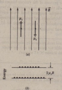 A proton (red dot), whose spin component in the direction of an applied magnetic field is !A. can occupy either of two quantized orientations in an external magnetic field. IfEq. 41-21 is satisfied, the protons in the sample can be induced to flip from one orientaiion to the ather. (b) Normally, there are more protons in the lower energy state than in the higher energy state.